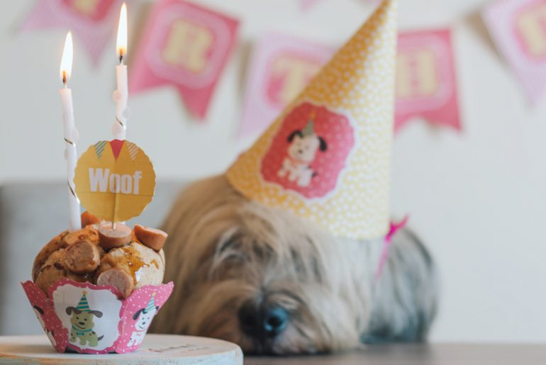 Dog, Birthday