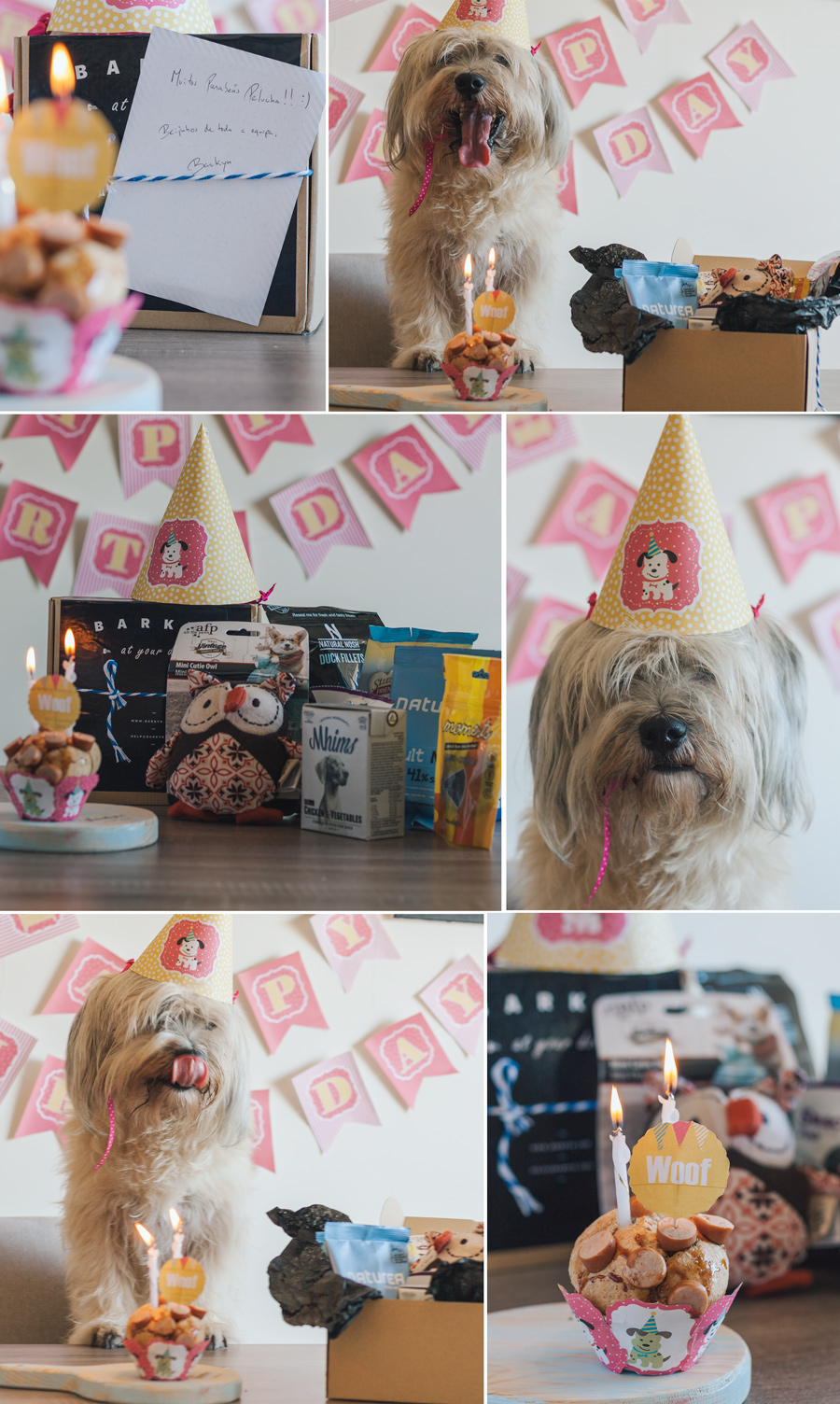 Dog, Birthday, Barkyn