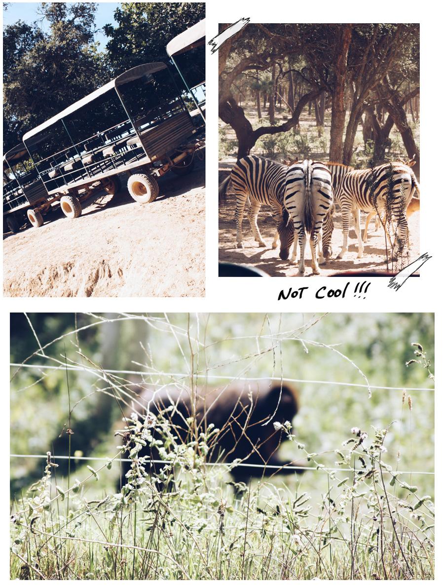 Badoca Safari1