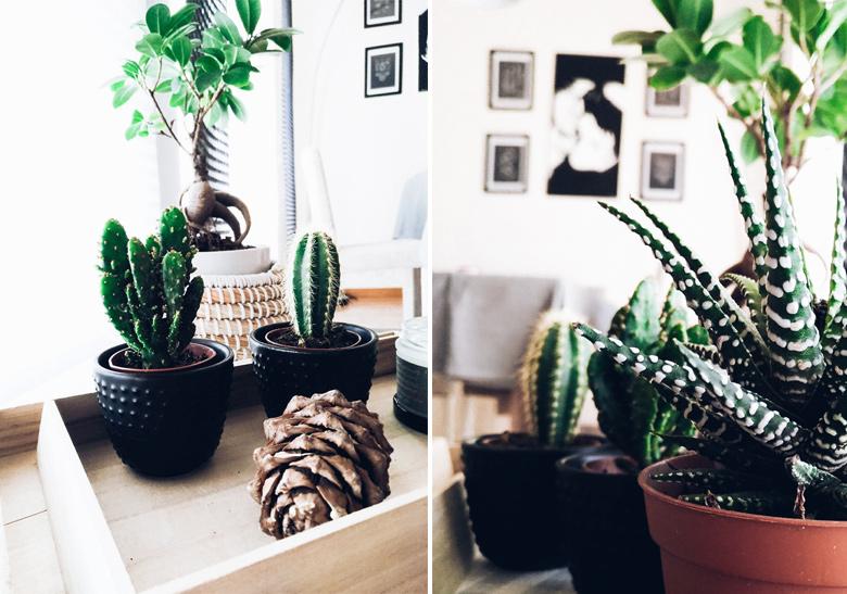 Cactus_vibes